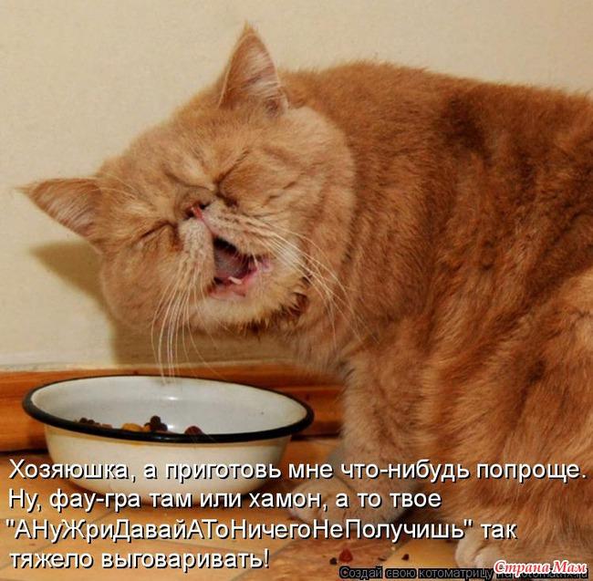 Всемирный День Кошек - Страница 3 58743810