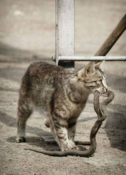 Всемирный День Кошек - Страница 5 C1fa-s10