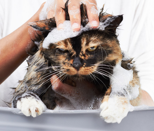 Всемирный День Кошек - Страница 5 Cat-ba10