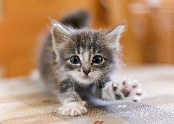 Всемирный День Кошек - Страница 9 Dazhoo10