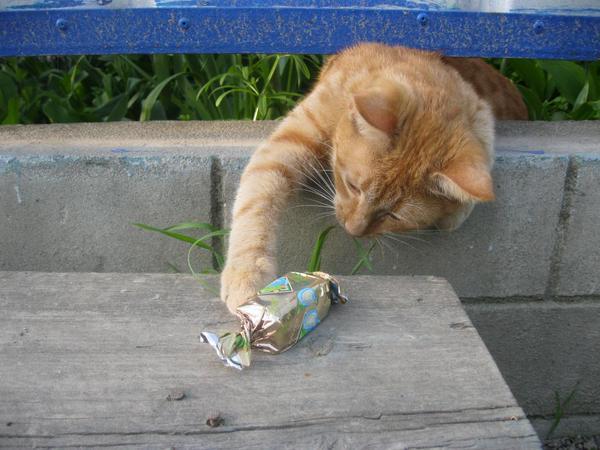 Всемирный День Кошек - Страница 9 Dc5iag10