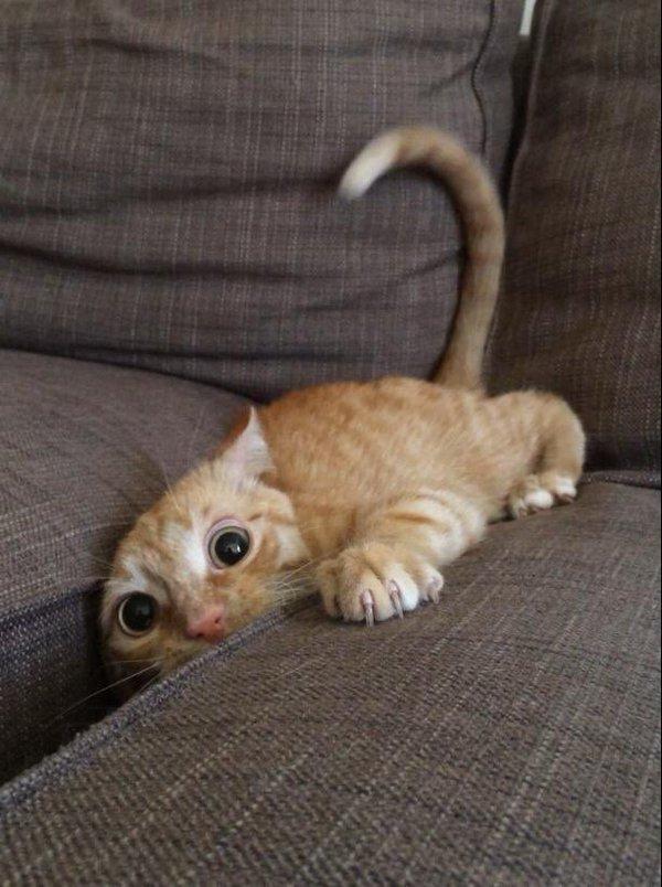 Всемирный День Кошек - Страница 9 Deaze110