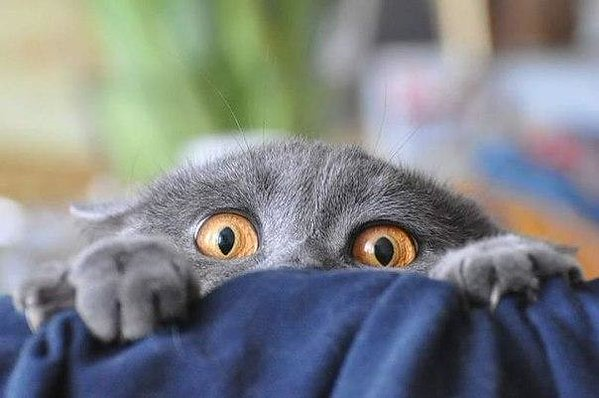 Всемирный День Кошек - Страница 5 Dncbdf10