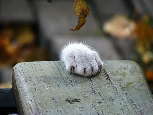 Всемирный День Кошек - Страница 5 Dnitwn10
