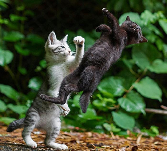 Всемирный День Кошек - Страница 3 Dnxot210