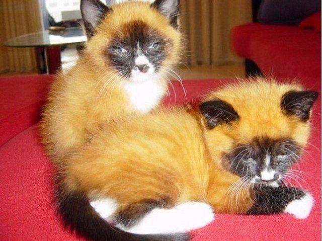 Всемирный День Кошек - Страница 5 Do8zfr10