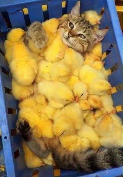 Всемирный День Кошек - Страница 3 Donxx110
