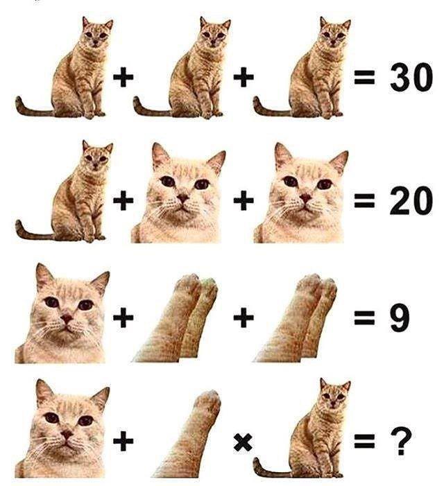 Всемирный День Кошек - Страница 3 Dorrba10