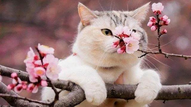 Всемирный День Кошек - Страница 9 Dw9oa910