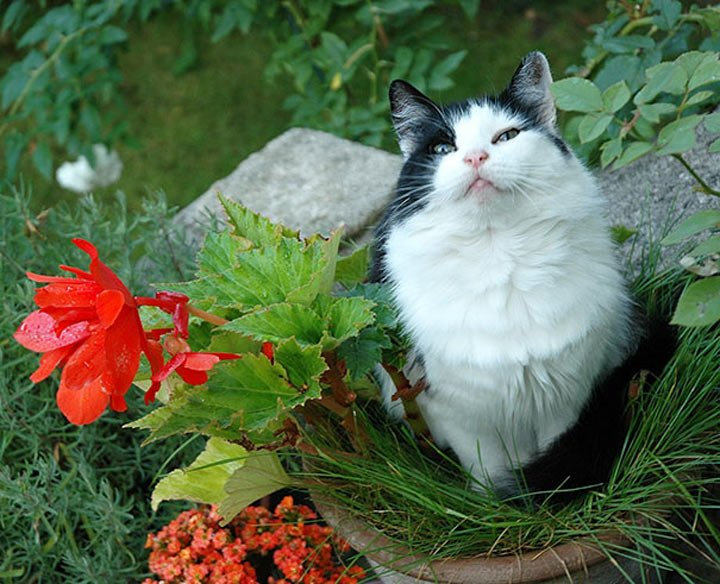 Всемирный День Кошек - Страница 9 Dypwzb10