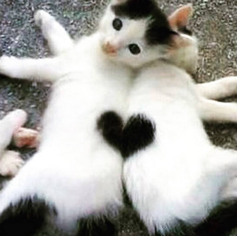 Всемирный День Кошек - Страница 9 Dzd8we11