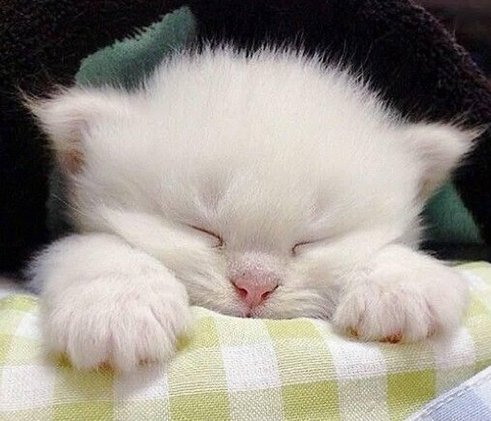 Всемирный День Кошек - Страница 9 Dzd9ai10