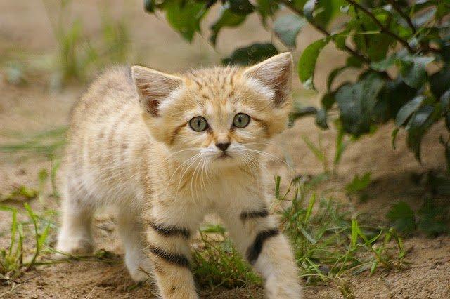 Всемирный День Кошек - Страница 9 Dzd9bu10