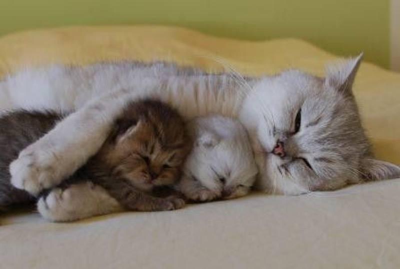 Всемирный День Кошек - Страница 9 Dzd9oz10