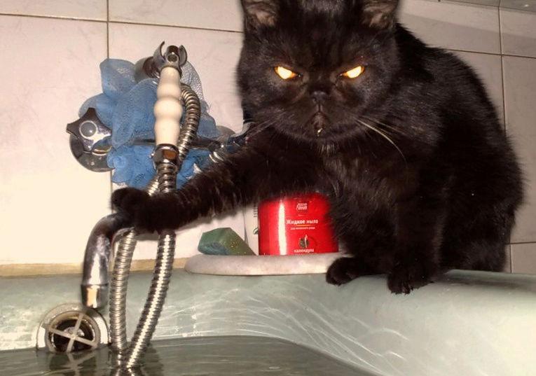 Всемирный День Кошек - Страница 5 Osobo-10