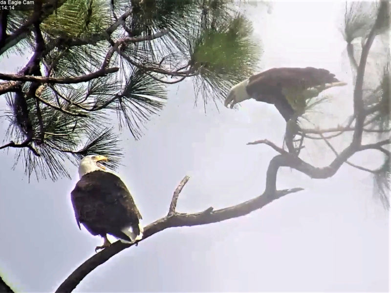 Southwest Florida Eagle Cam 2017-155