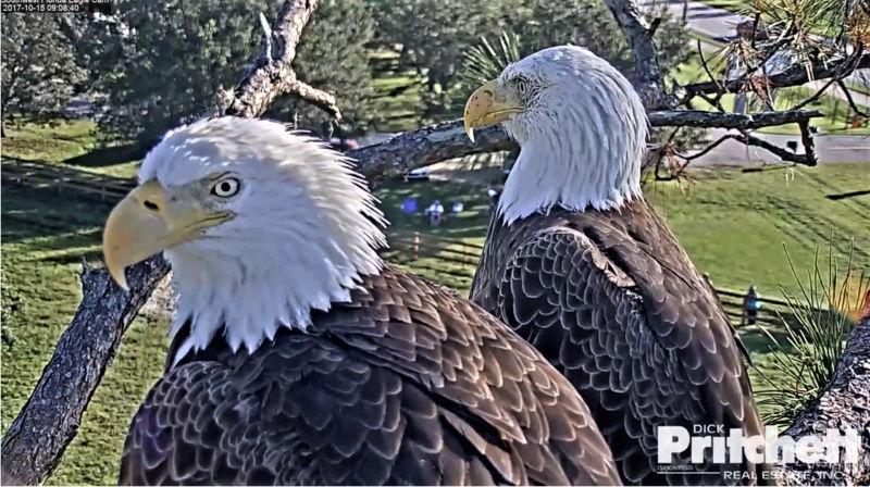 Southwest Florida Eagle Cam 2017-187