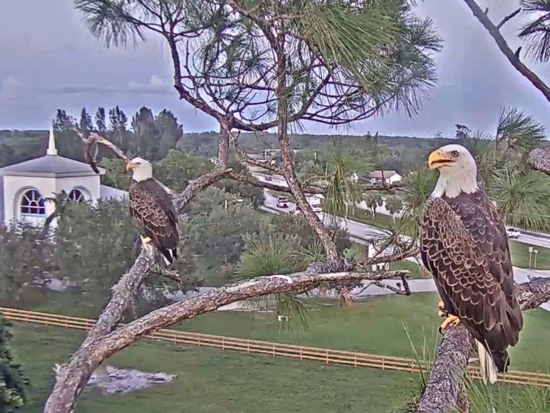 Southwest Florida Eagle Cam 2017-205