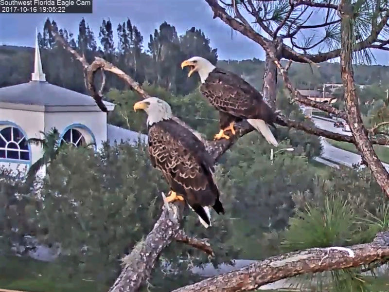 Southwest Florida Eagle Cam 2017-209