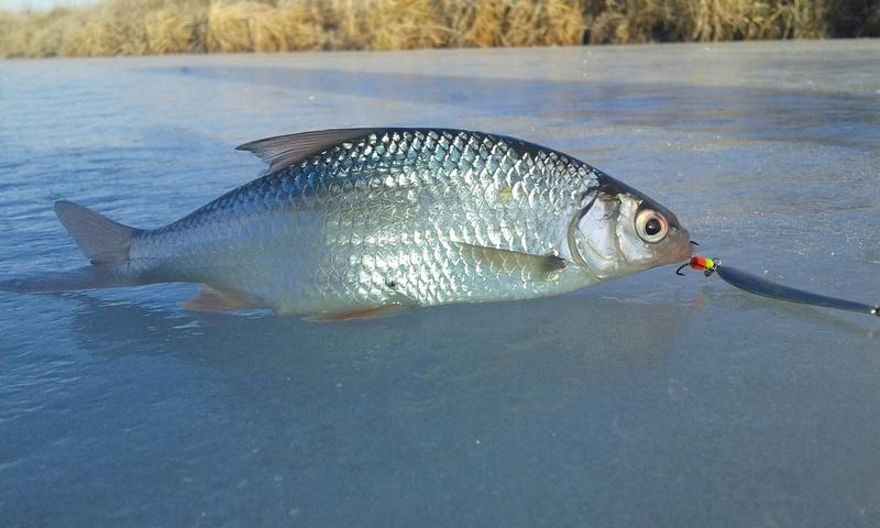 Зимняя рыбалка - Страница 6 20171112