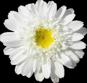 Энергия   осенних цветов 0_740510