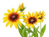 Энергия   осенних цветов Images12