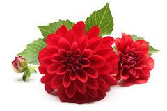 Энергия   осенних цветов Yazaa-10