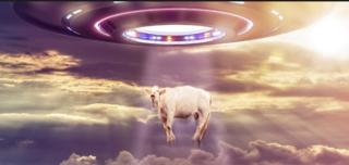 Mystérieux objets célestes et mutilations animales Captur19