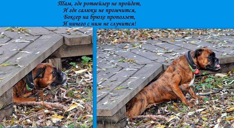 Москва, Фимочка-Нимфадора Тонкс(Дора), 1 год - Страница 26 Oaz10