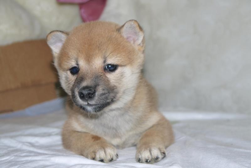 Куплю щенка P1160815