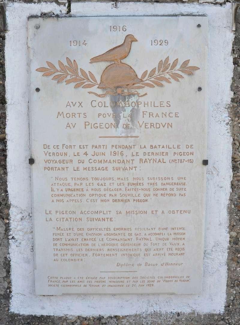 Les pigeons dans les transmissions - Page 2 Dsc_0128