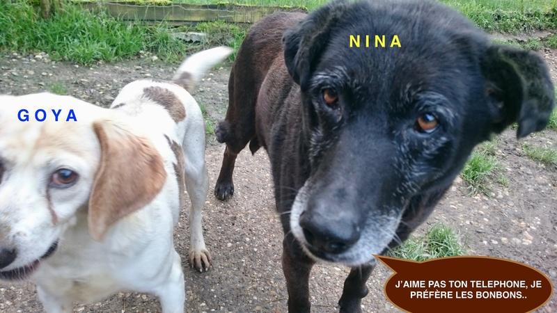 NINA -    9 ans (8 ans de refuge)  Refuge des Clochards Poilus ç Tabanac (33) Dsc_0010