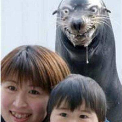 [Jeu] Association d'images - Page 2 Seal_410