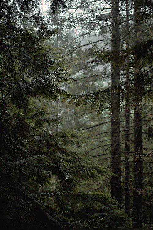 Божества Леса • Леший. Часть II • Быт и тропы Tpxq0q10