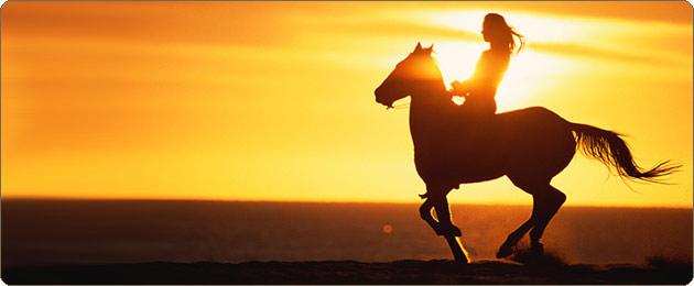 30.09.1253г. Конь не свой - погоняй, не стой! 376010