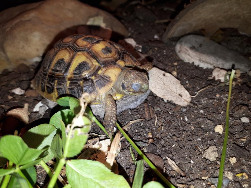 Ma tortue garde les yeux fermés 2018-118