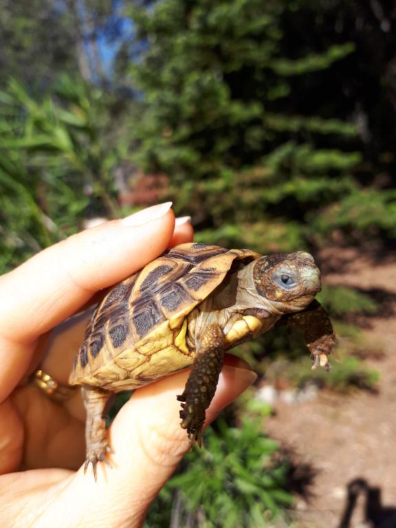 Ma tortue garde les yeux fermés 20180910