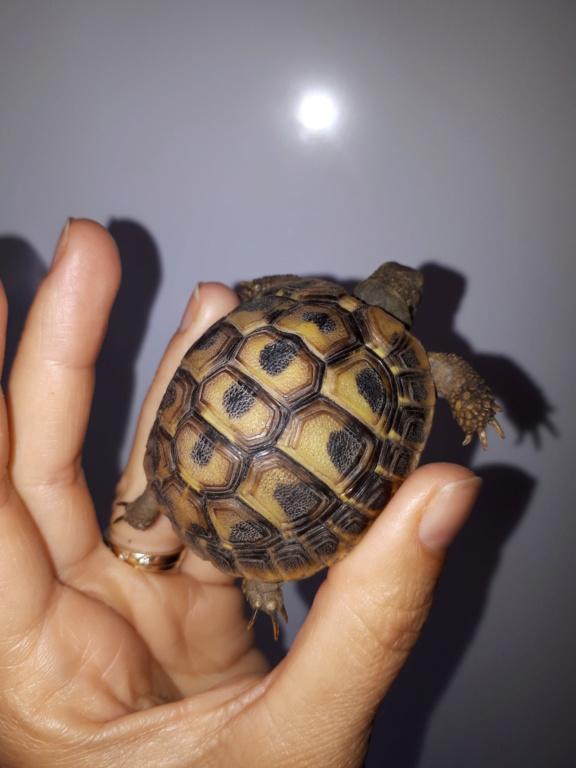 Ma tortue garde les yeux fermés 20181017