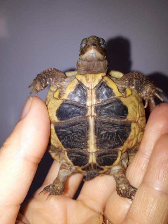 Ma tortue garde les yeux fermés 20181018