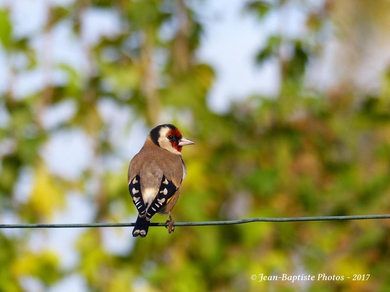 Les oiseaux de mon jardin. Copie_27