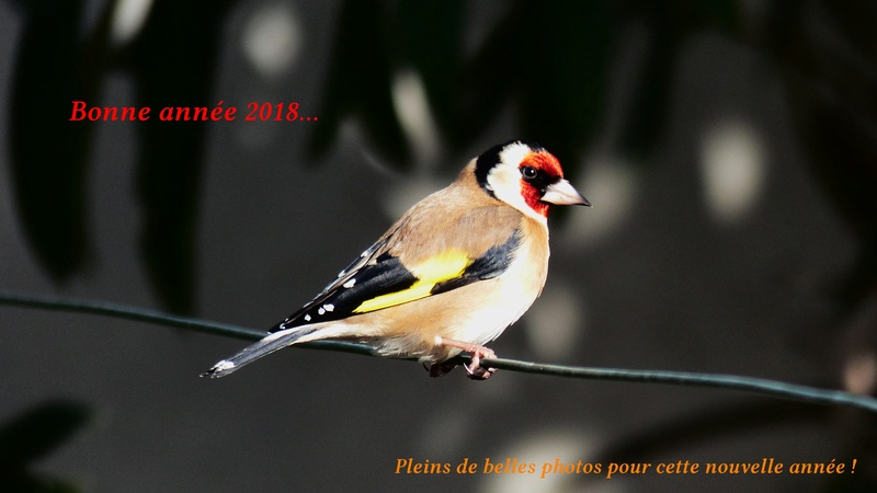 Photos Oiseaux P1860214