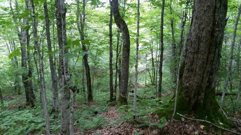Terre a bois 207 acres 3000 entailles de pret 4_juil10
