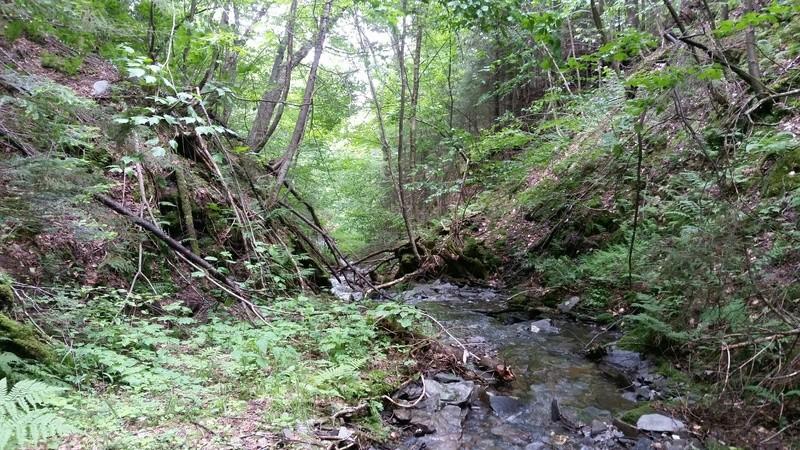 Terre a bois 207 acres 3000 entailles de pret 4_juil11