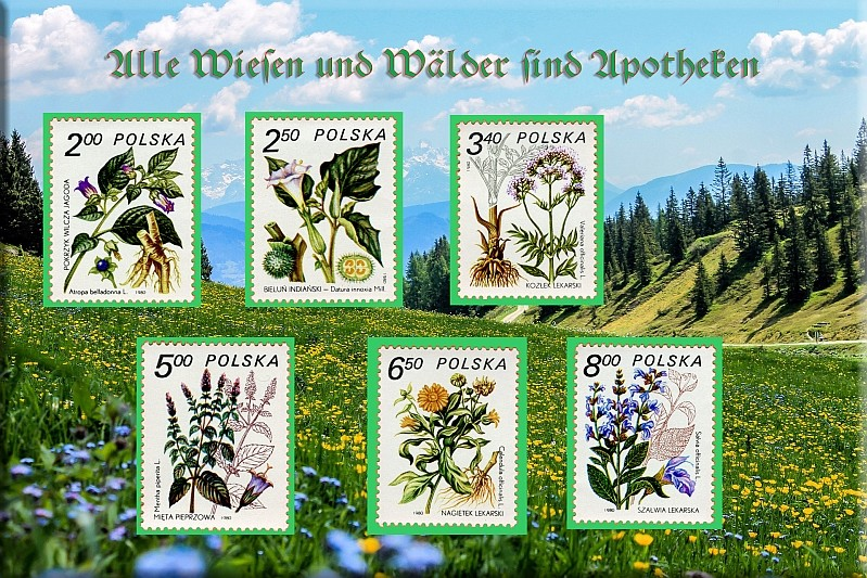 Heilpflanzen Apothe10