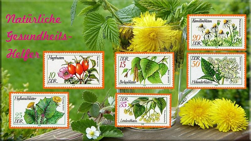 Heilpflanzen Gesund10
