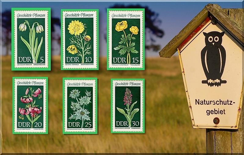 Heilpflanzen Naturs10