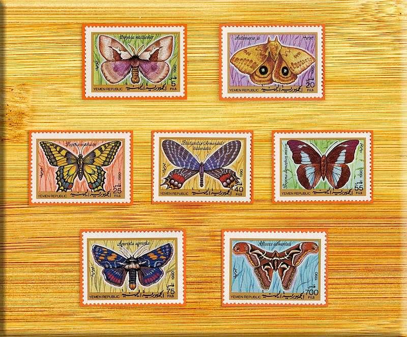 Schmetterlinge und Libellen - Kleine bunte fliegende Juwele Yemen_14