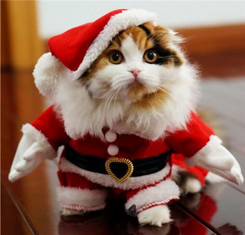 Grand concours d'avatar de Noël 2017 ! - Page 4 Cat-cu10