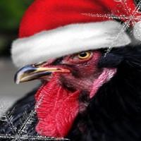 Grand concours d'avatar de Noël 2017 ! - Page 2 Lecoq_10