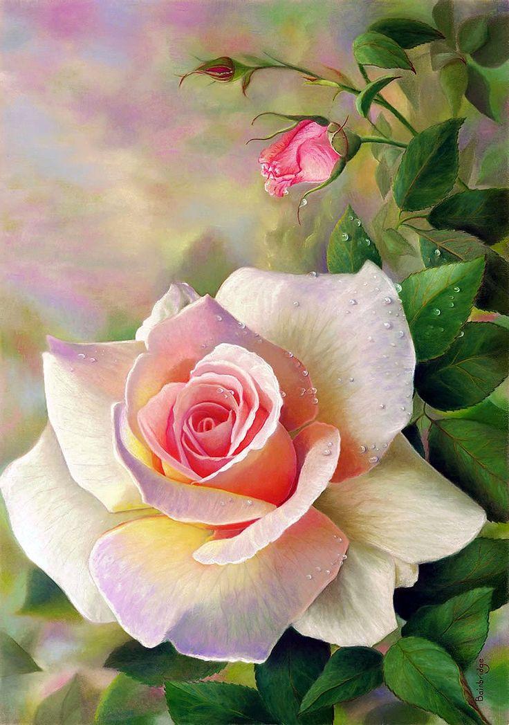 Le doux parfum des roses - Page 21 92550910